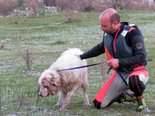 girolamo parretta cane salvato